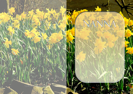 DAFFODIL outside standard card