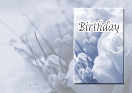 Birthday white Rose  outside