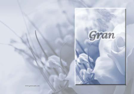 Gran white Rose  outside