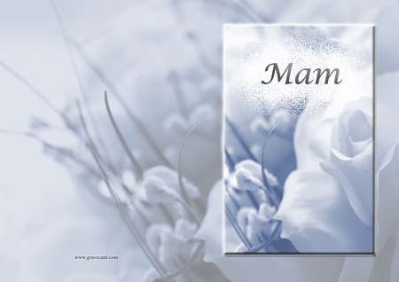 Mam white Rose  outside Resized